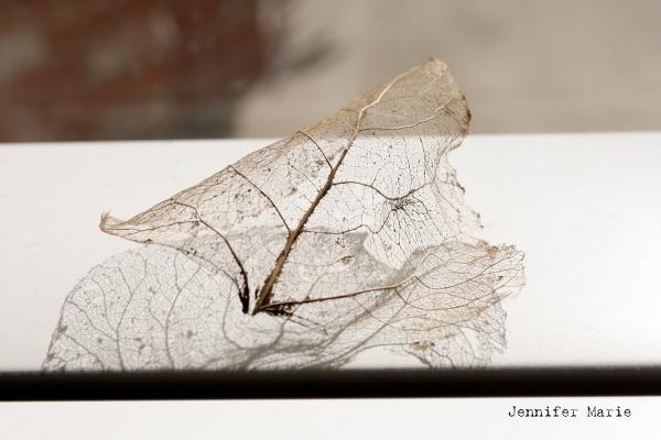 leaf 004