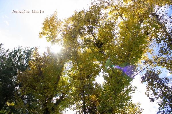 leaf 052