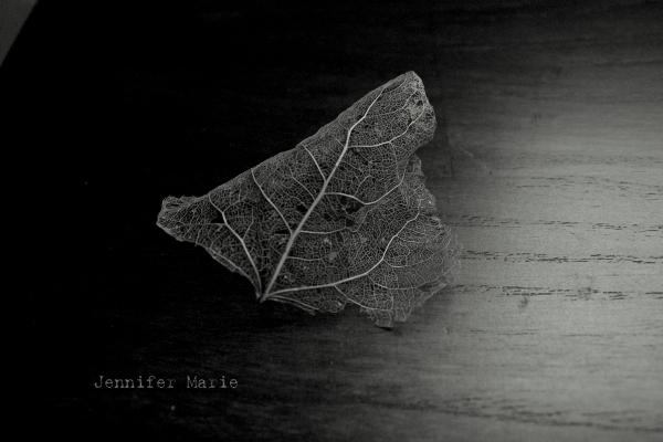 leaf 081-001