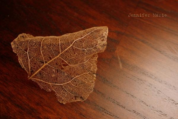 leaf 084