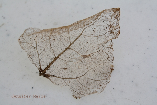 leaf 113