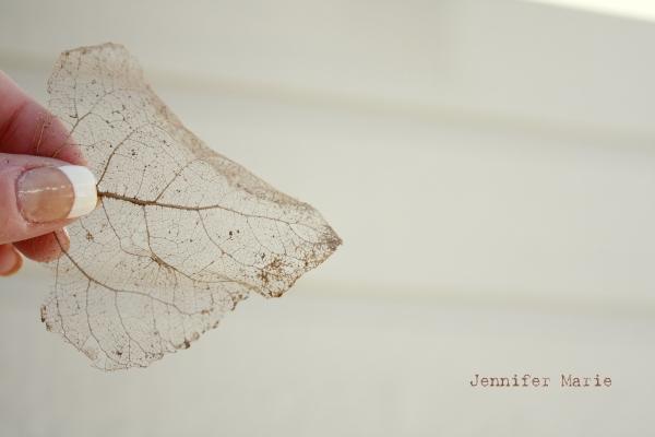 leaf 115
