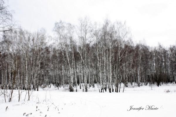 Walk in the woods 020