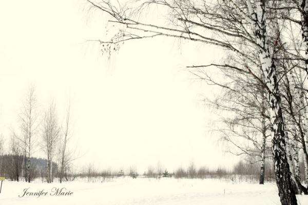 Walk in the woods 030
