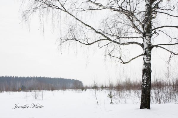 Walk in the woods 032