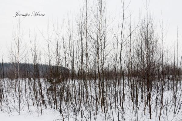 Walk in the woods 035