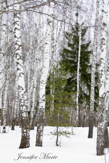Walk in the woods 040