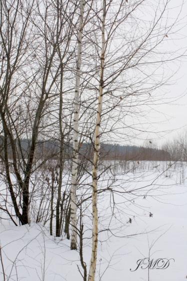Walk in the woods 045