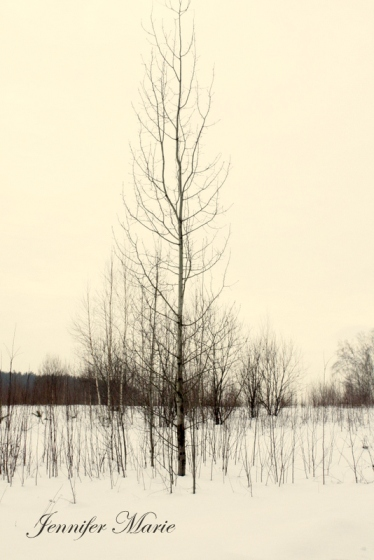 Walk in the woods 047