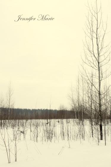Walk in the woods 048