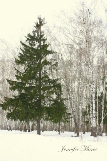 Walk in the woods 053