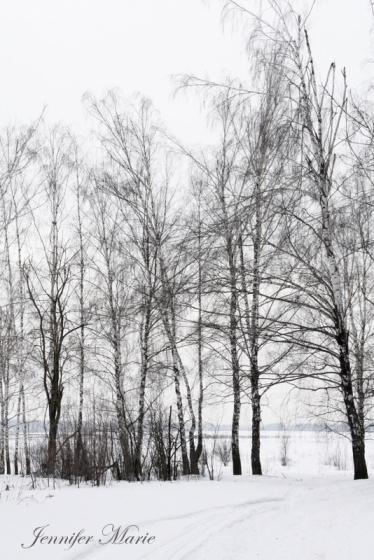 Walk in the woods 057