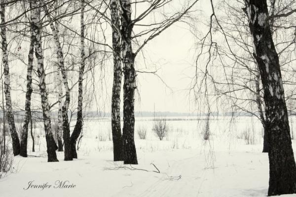 Walk in the woods 059