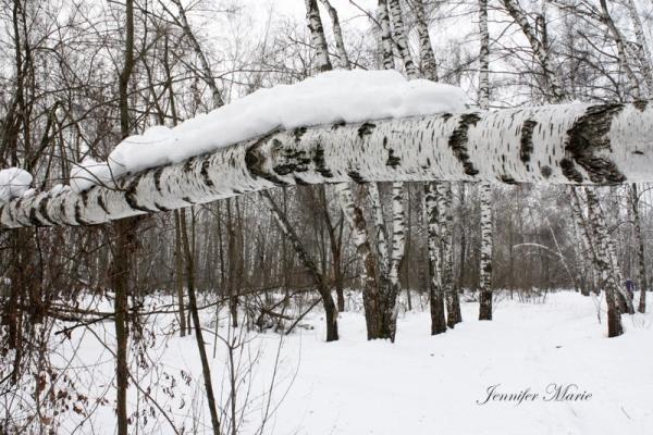Walk in the woods 082