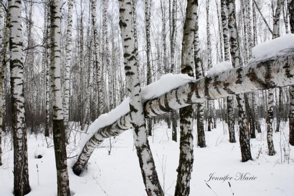 Walk in the woods 086