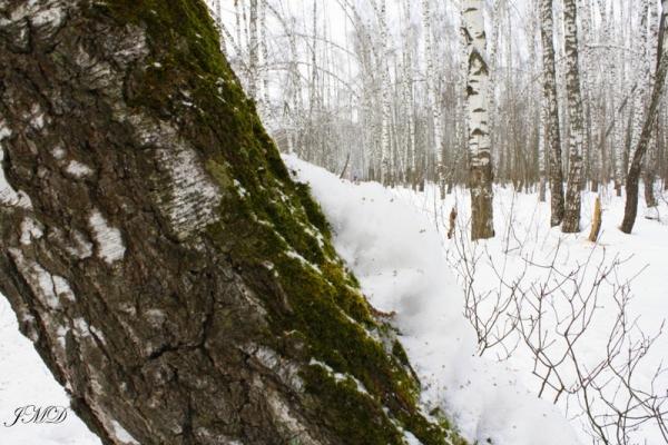 Walk in the woods 088