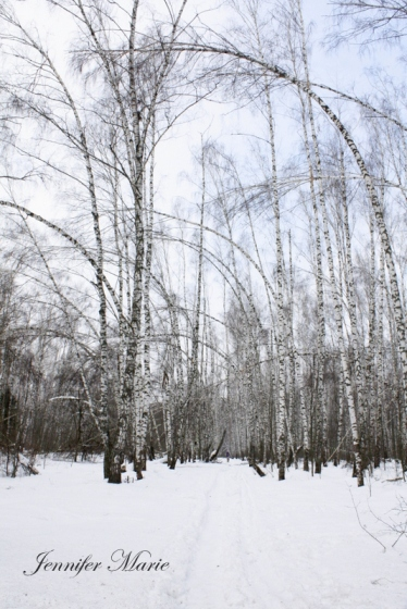 Walk in the woods 090