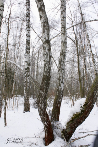 Walk in the woods 093