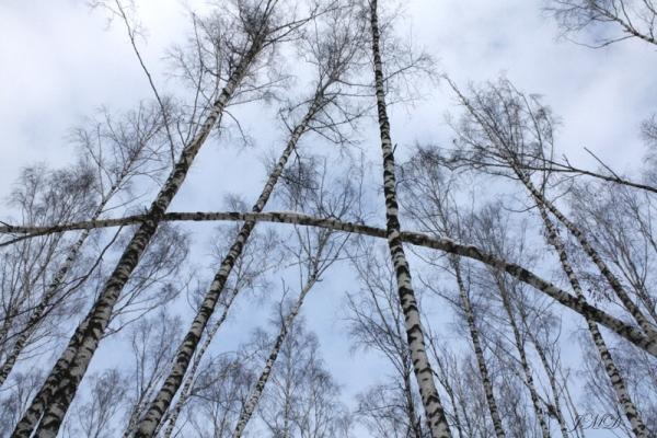 Walk in the woods 096