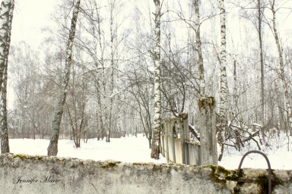 Walk in the woods 100