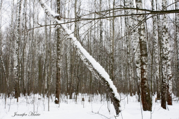 Walk in the woods 104
