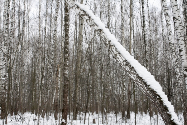 Walk in the woods 109