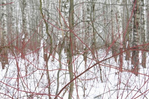 Walk in the woods 114