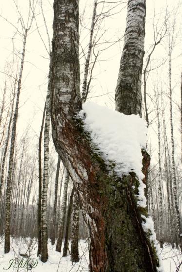 Walk in the woods 123