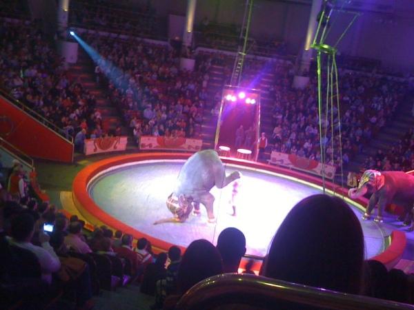 iphone circus 023