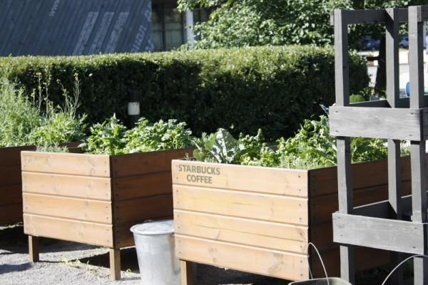 Did we find Starbucks' secret garden? ;P