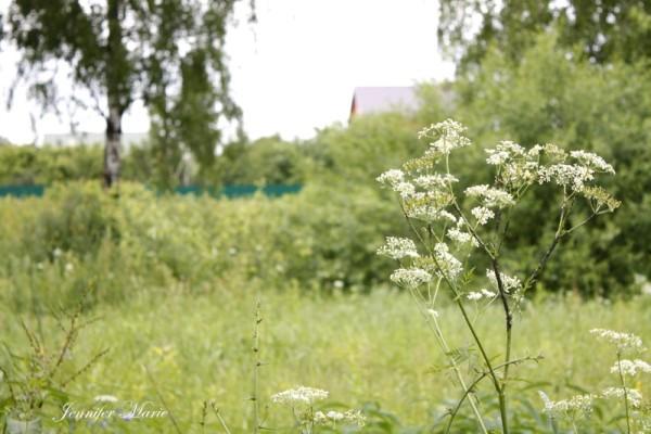 Rusisa in Summer 006