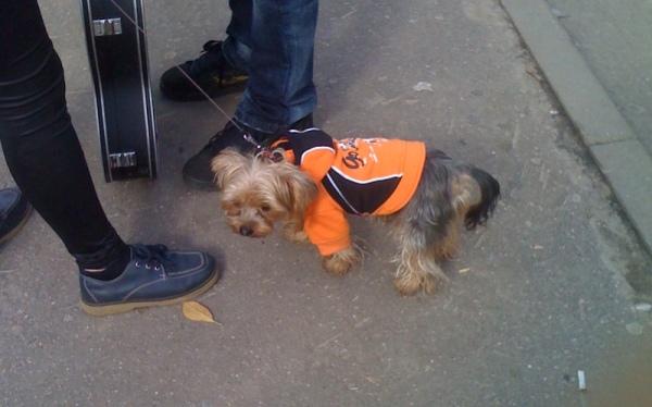 A Giants fan ;)