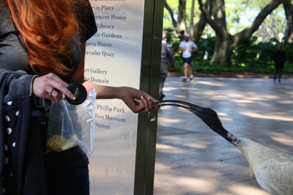 I was afraid this bird would accidentally bite my finger with that long beak!