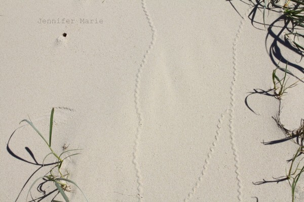 Curious tracks =)